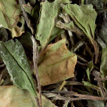 Tea from China - Paï Mu Tan