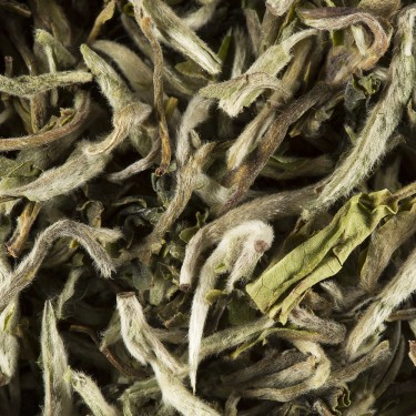 Tea from India - Darjeeling 1st Flush 2017 BADAMTAM F.T.G.F.O.P.