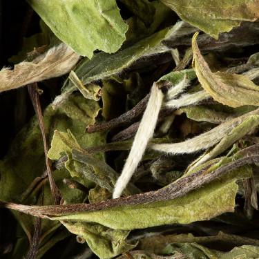 Thé de Chine - Paï Mu Tan Premium