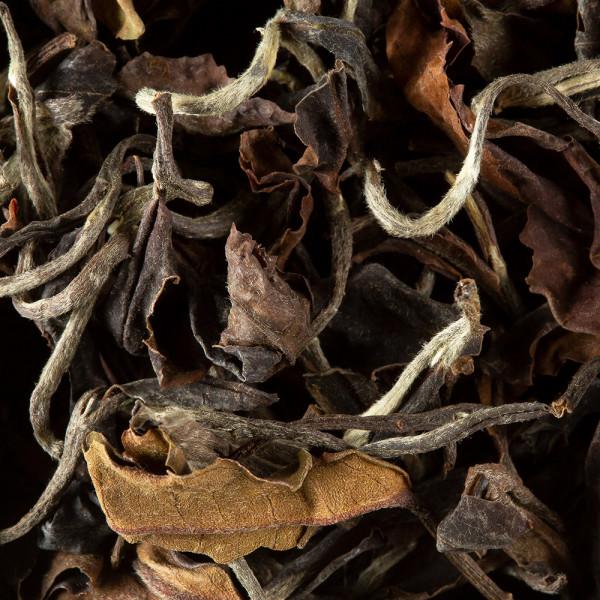 Thé blanc - TORO BLANCO