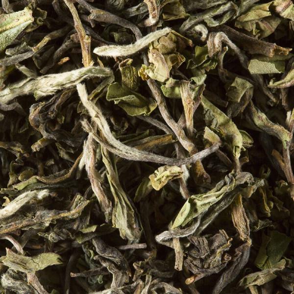 Tea from India - Darjeeling 1st flush 2021 PHUGURI F.T.G.F.O.P.